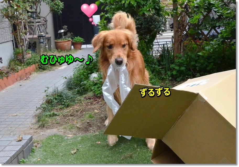 DSC_5977 むひゅひゅ~ ずる