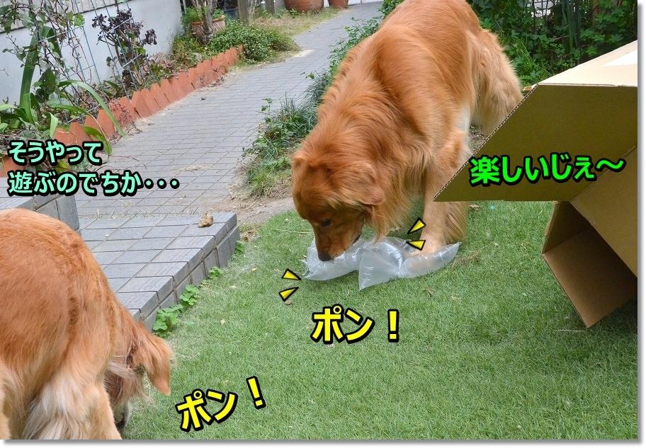 DSC_5979 ぽん!