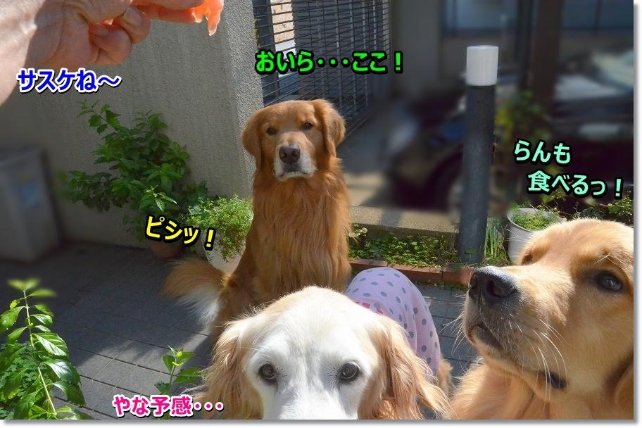 DSC_6066さすけ~