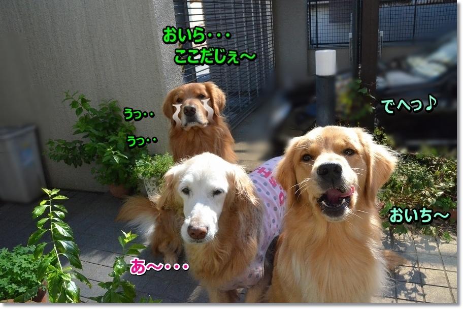 DSC_6067わ~