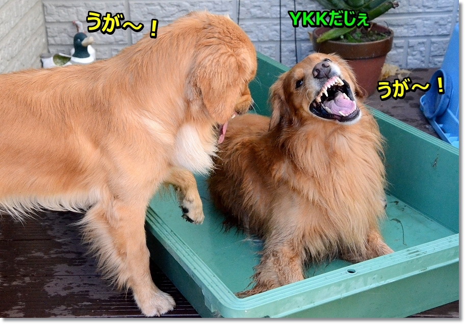 DSC_6116YKKだじぇ~