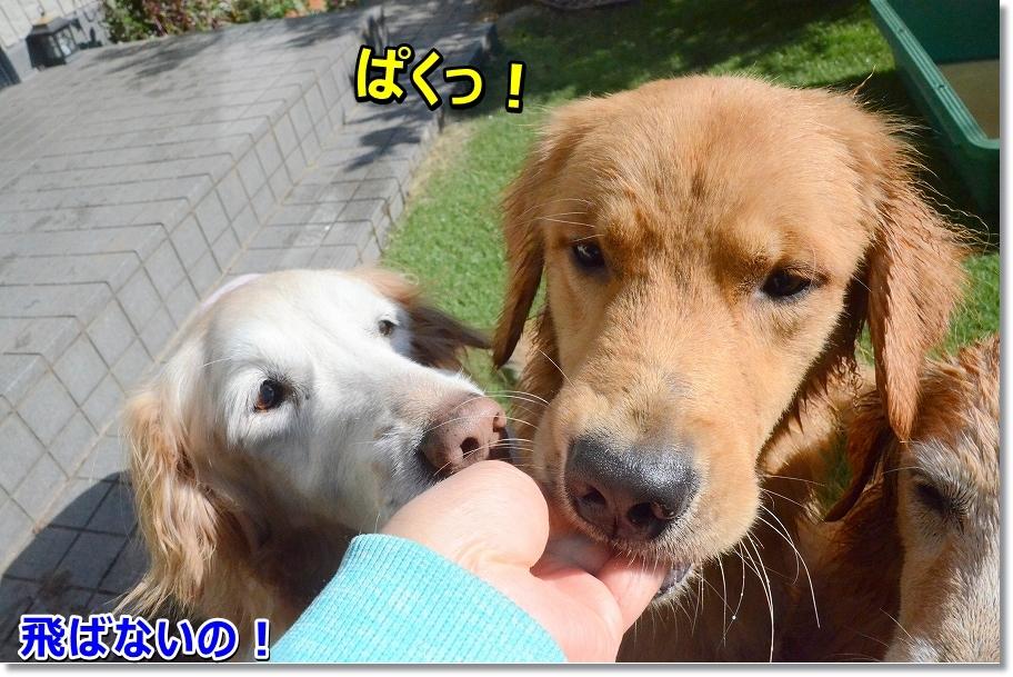 DSC_6139ばく
