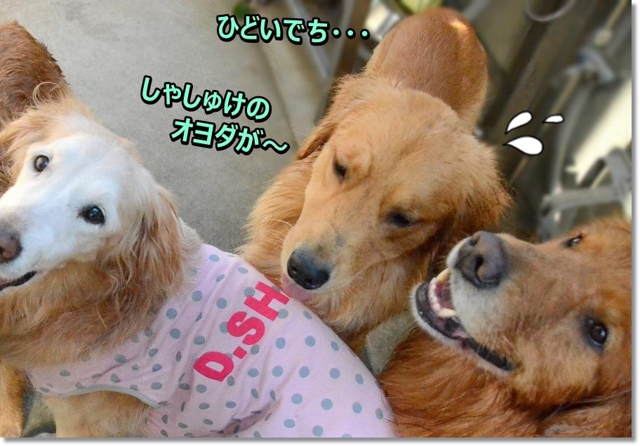 DSC_6143楽しみね - コピー