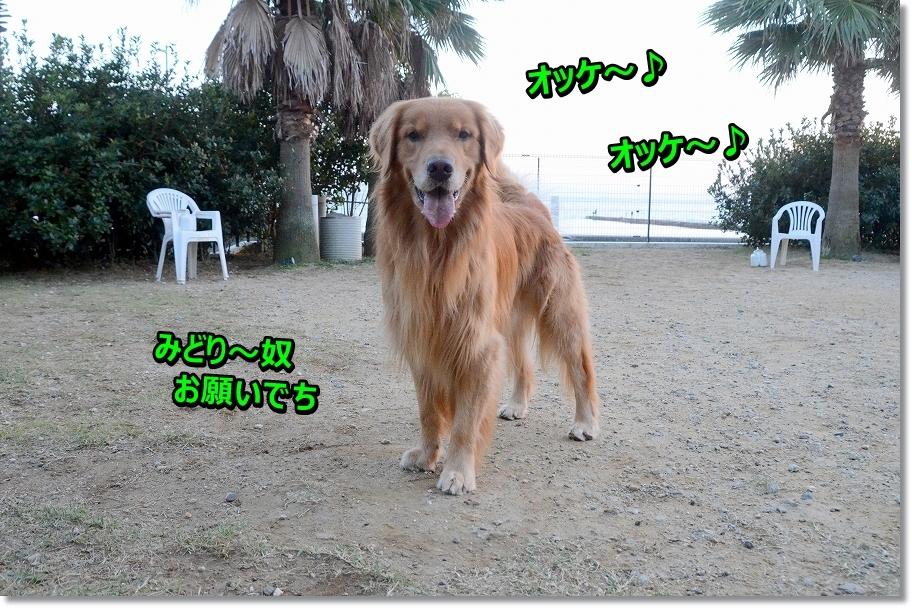 DSC_6158ほおって~