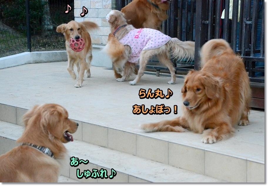 DSC_6171 らん しゅふれ~