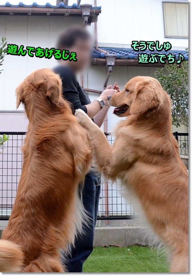 DSC_6218 遊ぼうじぇ