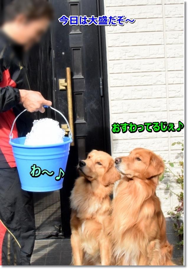 DSC_4314 しゅんげ~