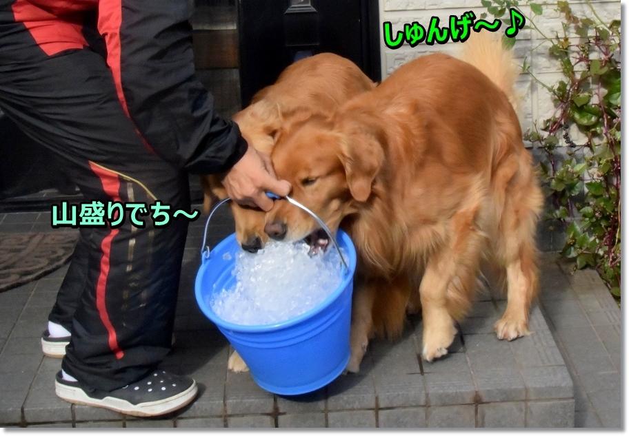DSC_4318 山盛りだじぇ~