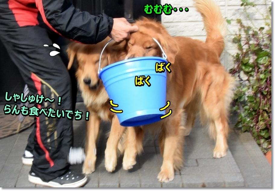 DSC_4330大騒ぎ