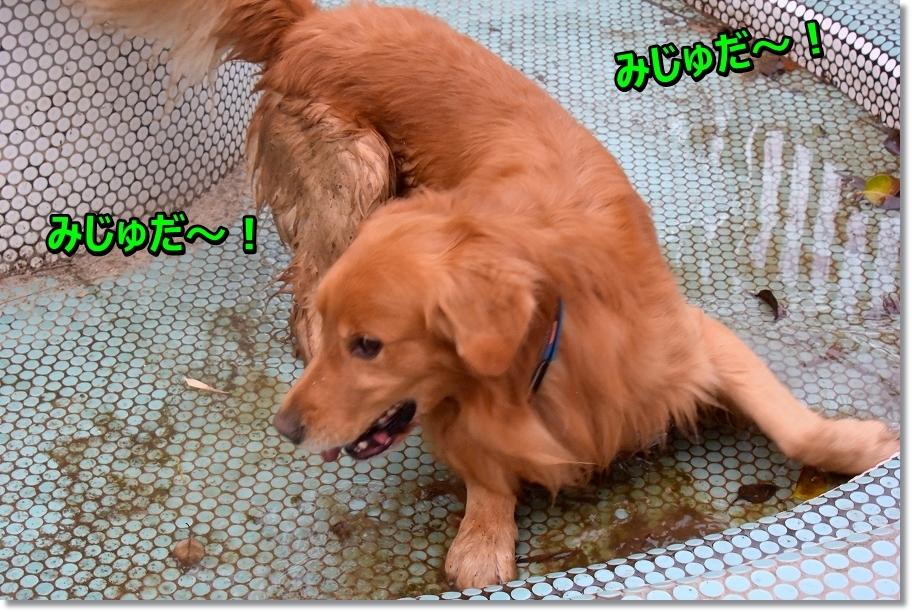 DSC_4408 みじゅだ~