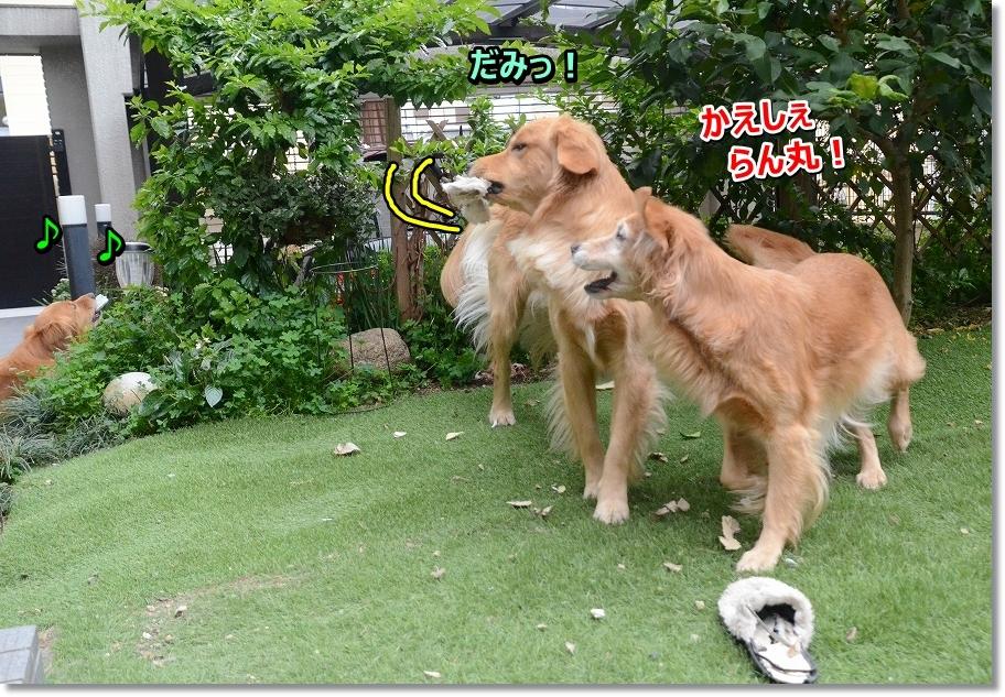 DSC_6235 ぶん!