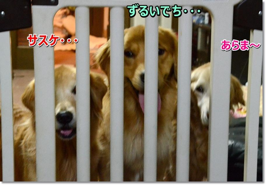 DSC_6925くしょ~!