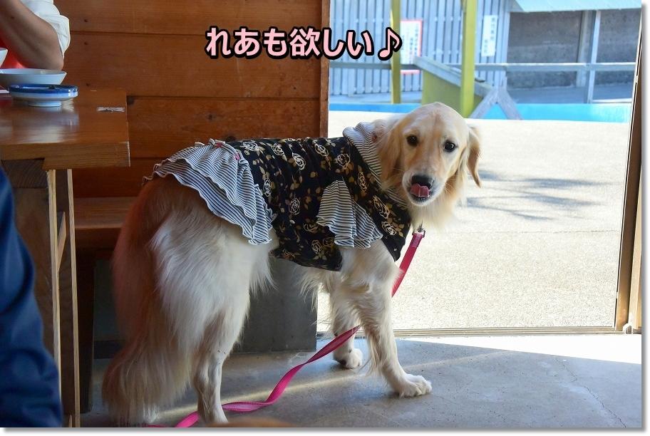 DSC_4690 番犬しましゅ