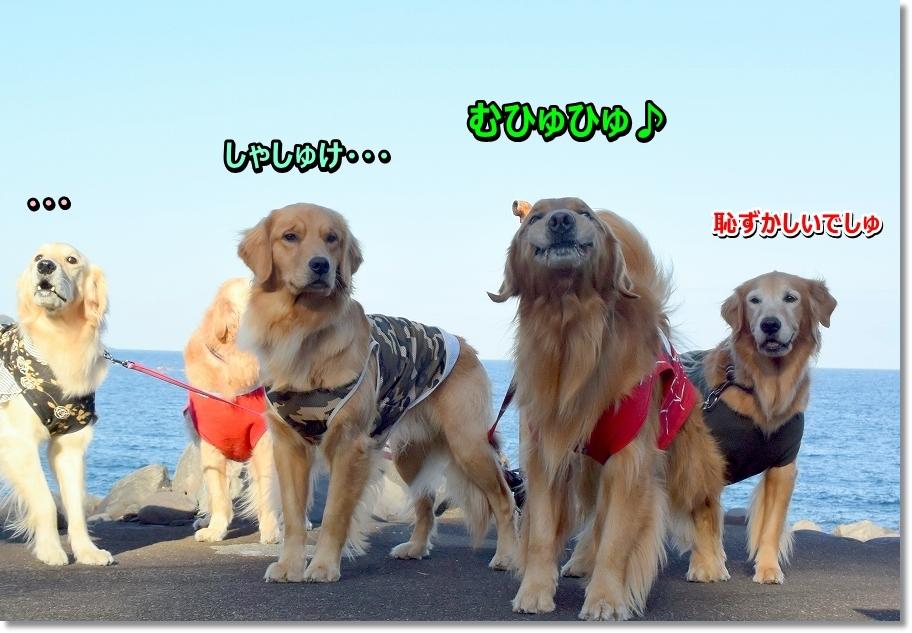 DSC_4727ぷくぷく