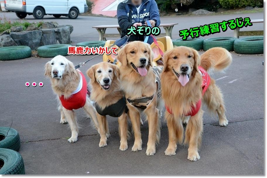 DSC_6408 馬鹿力を活かして犬ぞり練習します