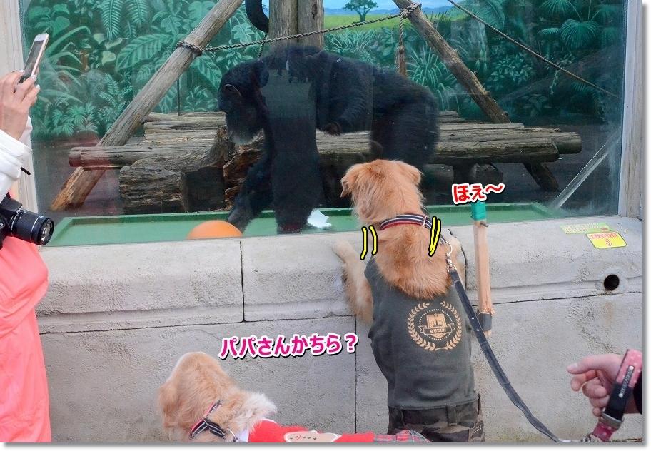 DSC_6521誰でしゅか~?
