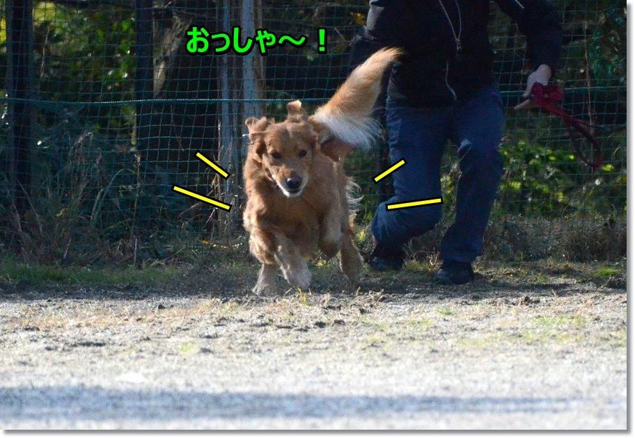 DSC_6576しゅわっ!