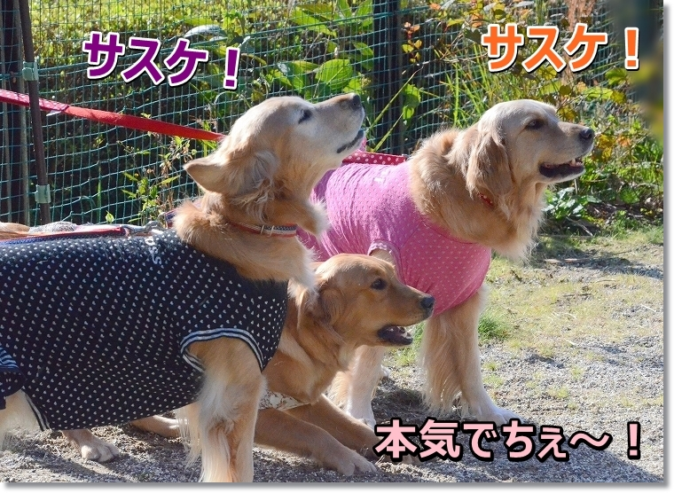 DSC_6602本気だじぇ~!