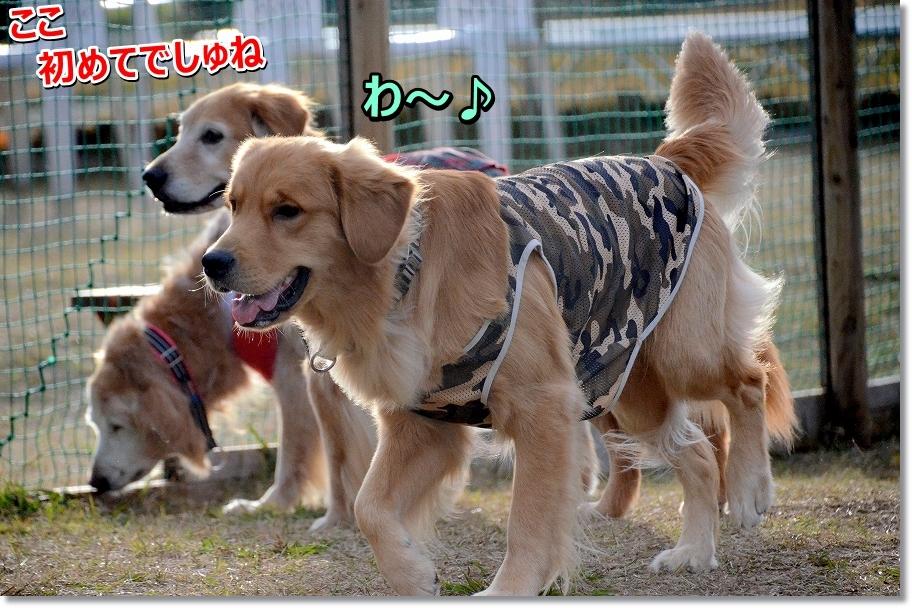 DSC_6756わ~い