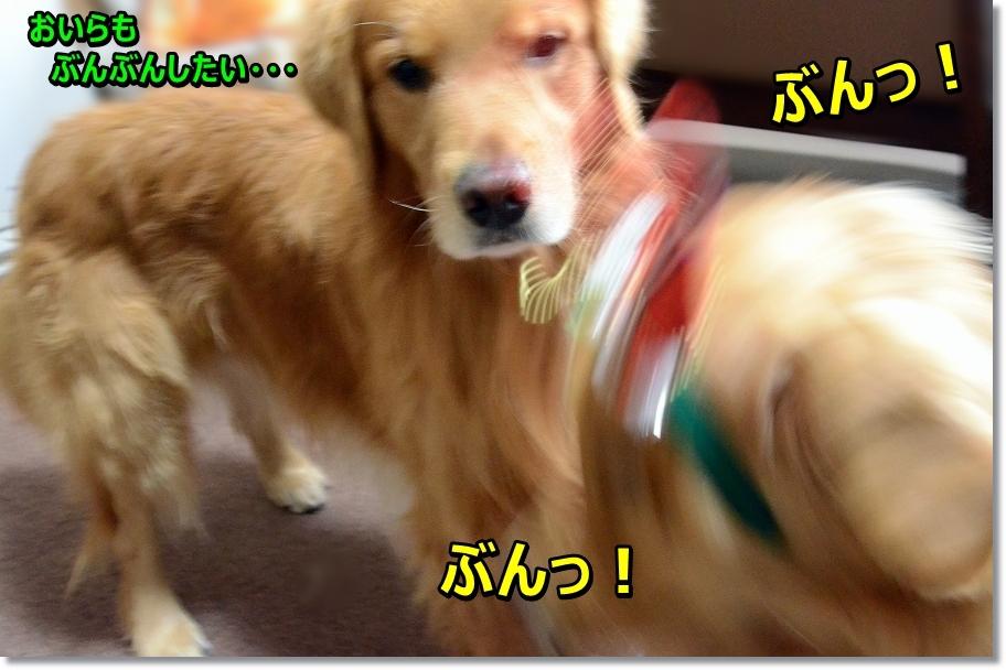 DSC_7534わ=!