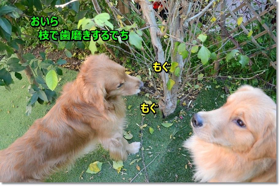 DSC_6967スリッパより枝でち