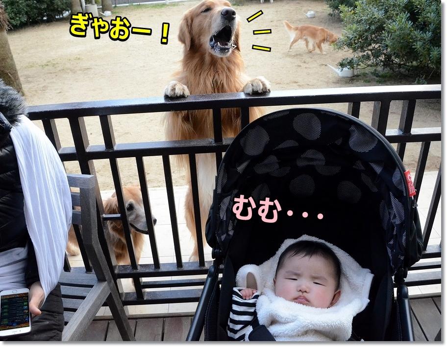 DSC_7235むむ・・・