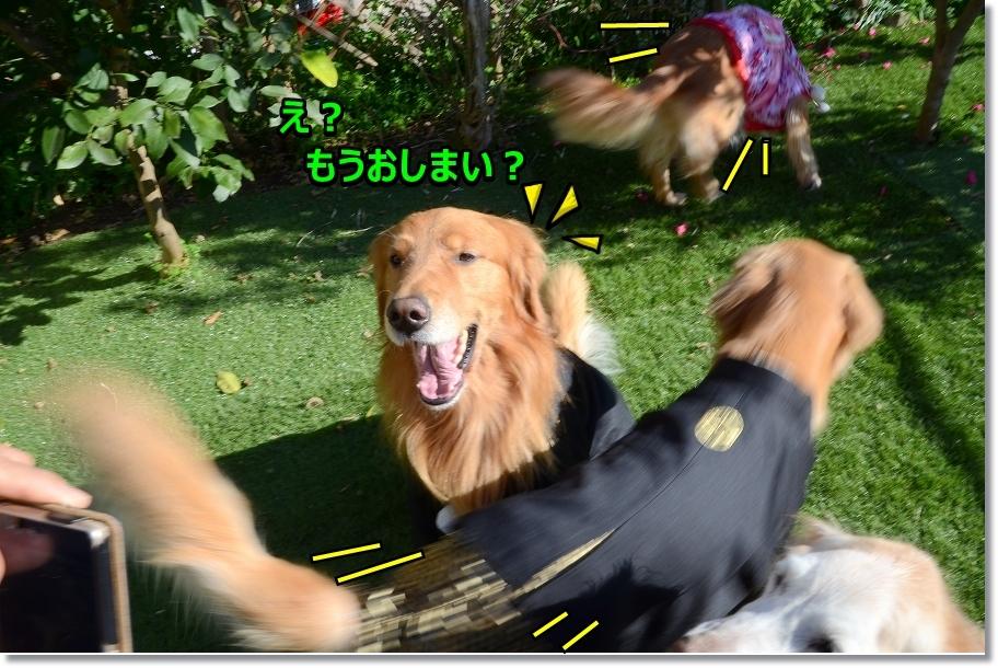 DSC_7663しょれ~