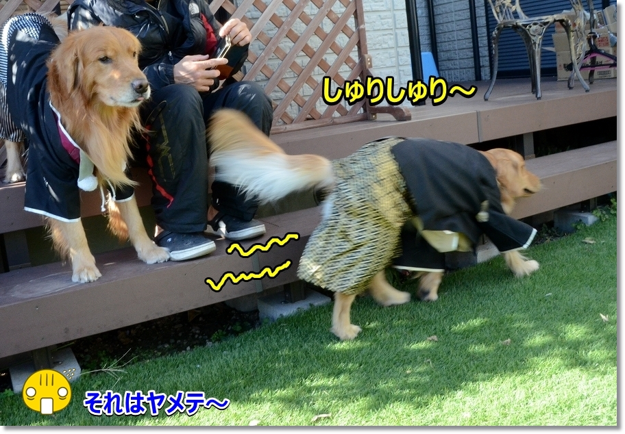 DSC_7674しゅりしゅり