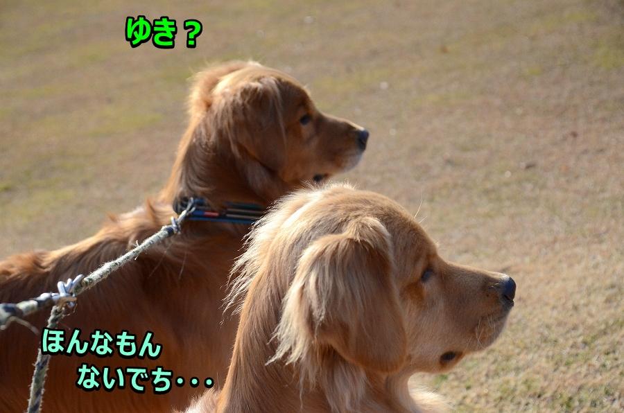 DSC_8045・・・ゆき?