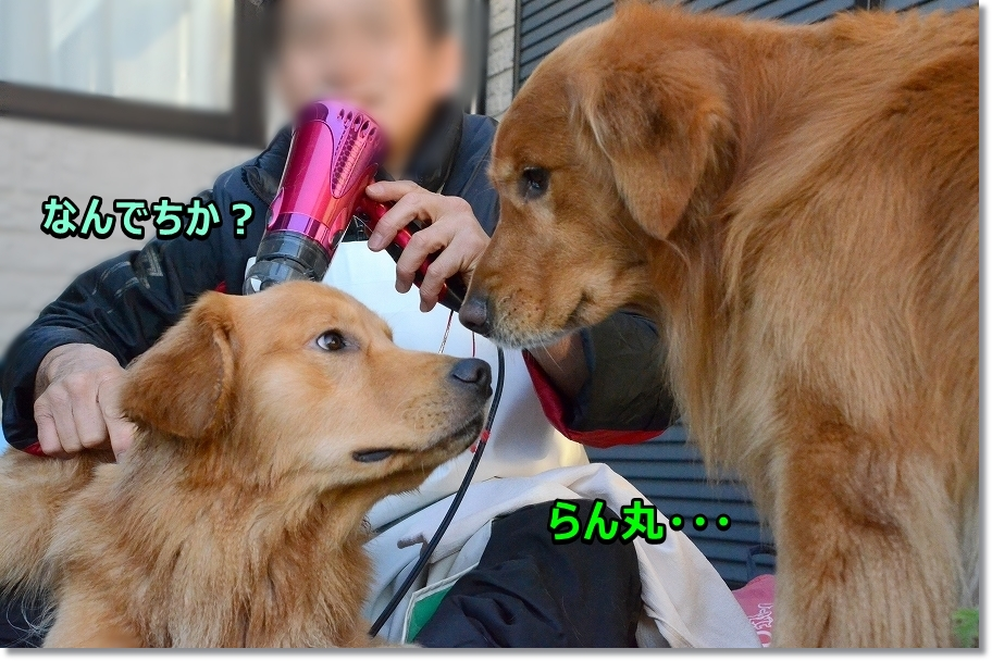 DSC_7783らん丸~