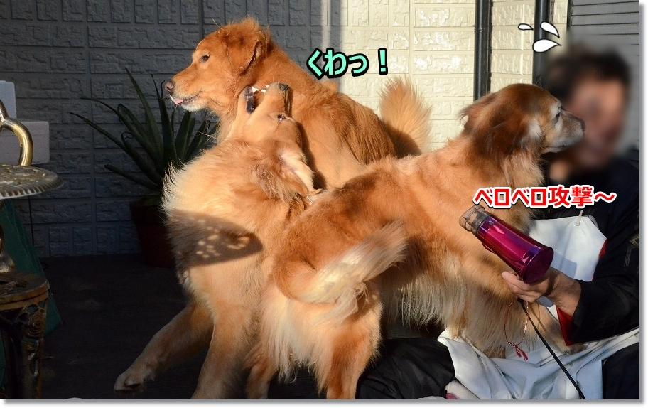 DSC_7862べろべろ