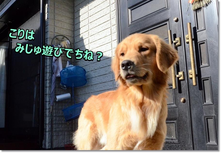 DSC_7880みじゅ遊び?