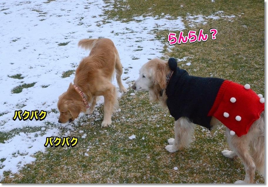 DSC_8764雪食べて