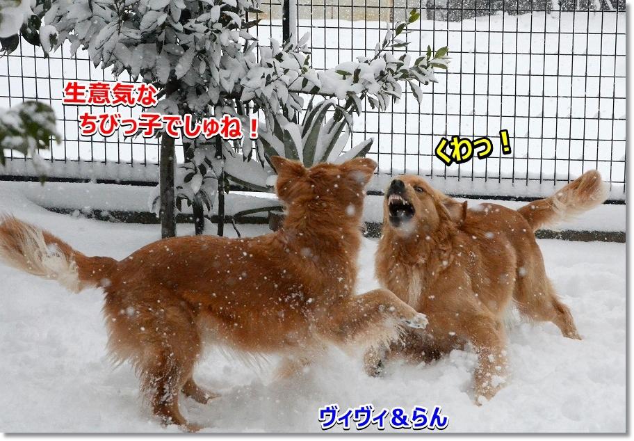 DSC_9206VIVI らん