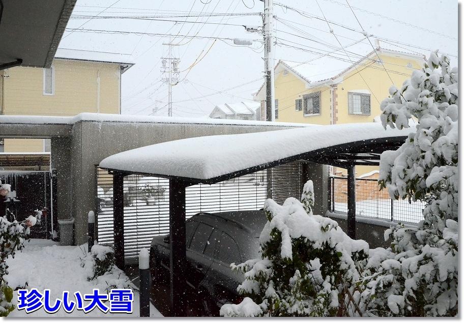 DSC_9307珍しいドカ雪