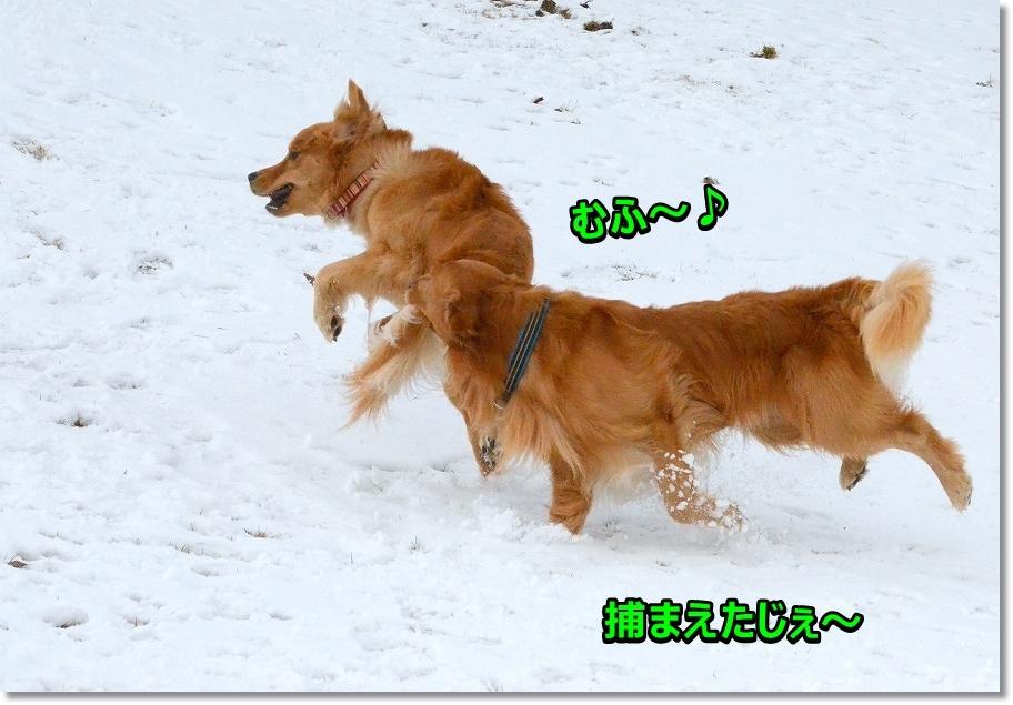 DSC_8870むふ~!