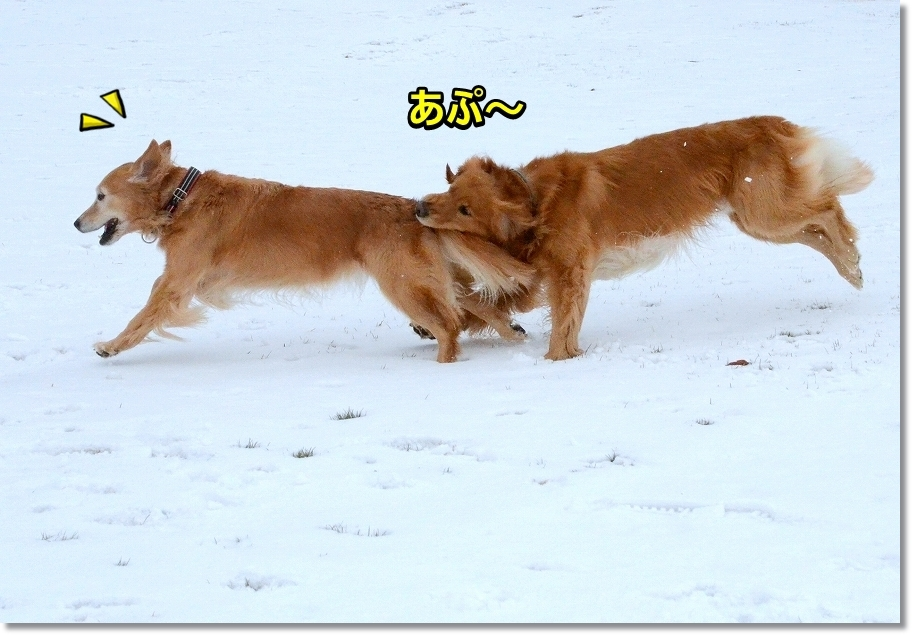 DSC_8894あぷ~