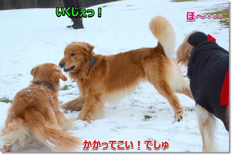 DSC_8904ヴぃっちゃん~