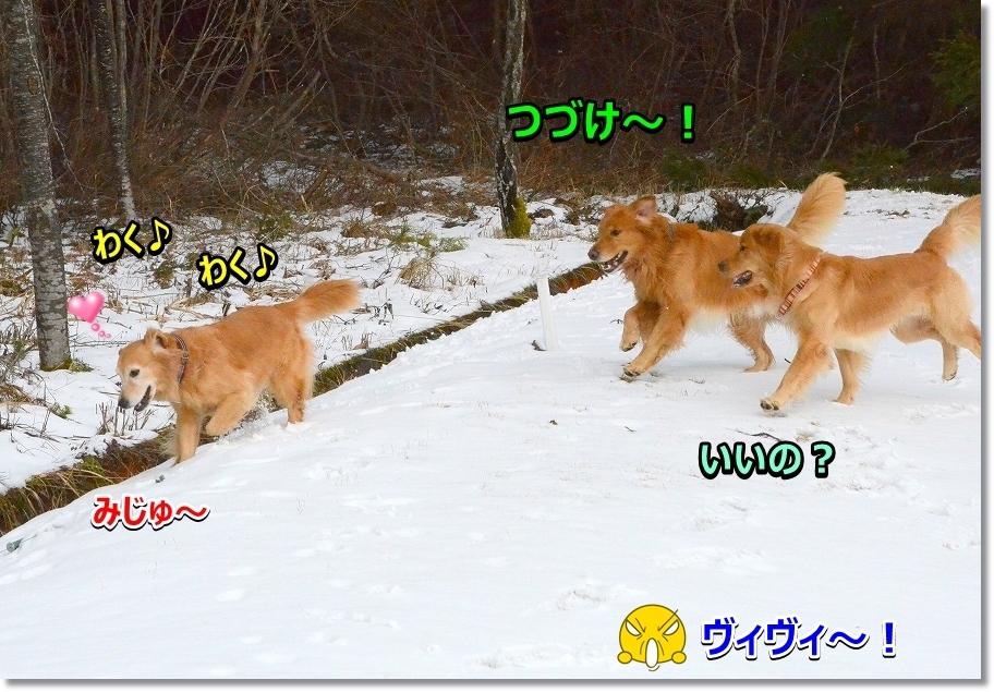 DSC_8923ダメだじぇ