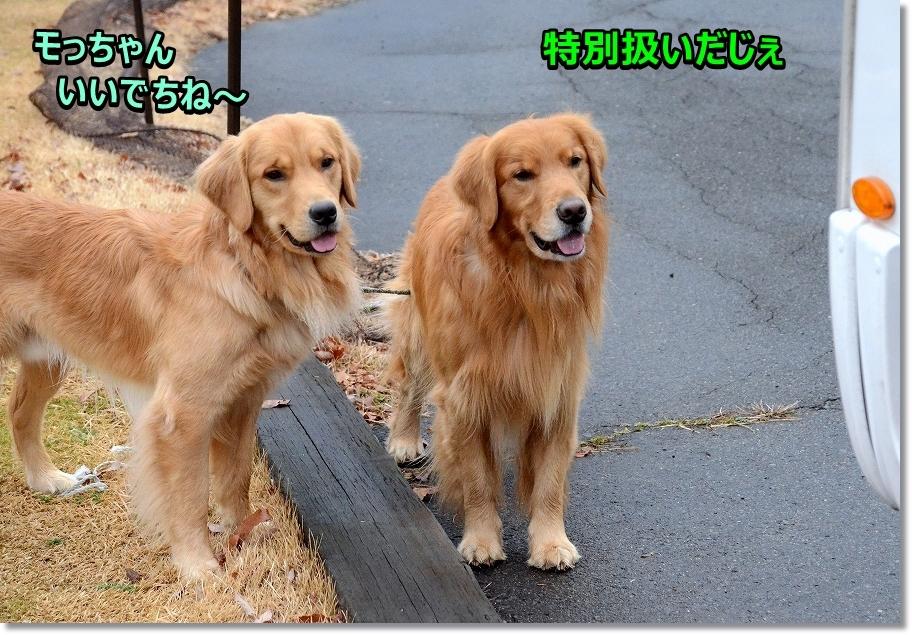 DSC_9033いいな~ - コピー