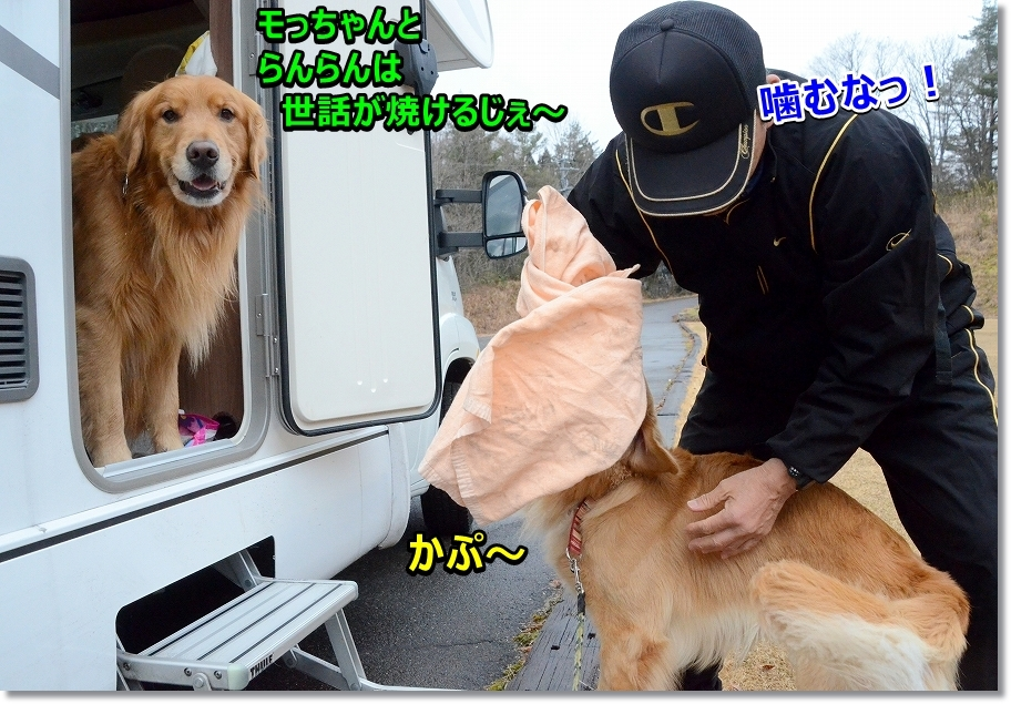 DSC_9042かぷ= - コピー