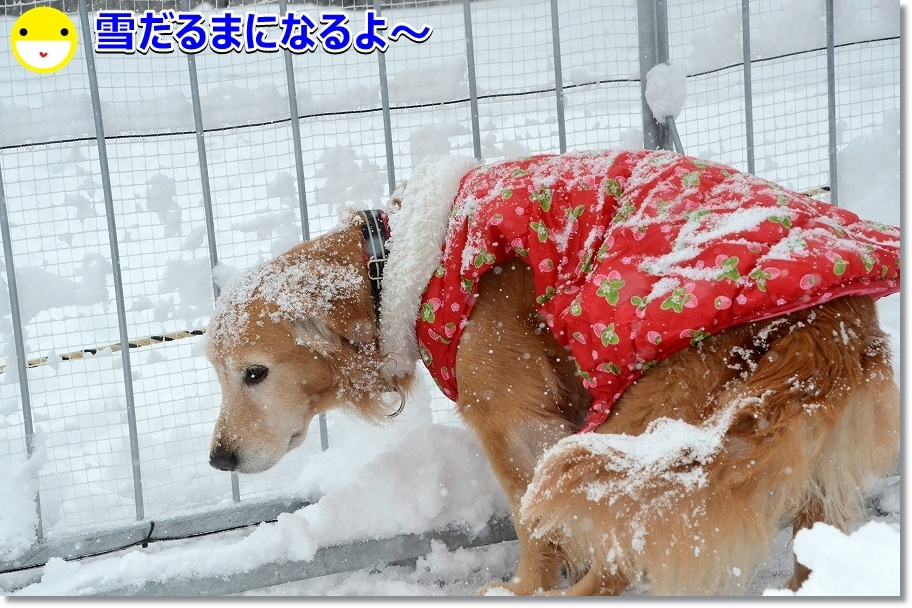 DSC_9376雪だるまになるよ
