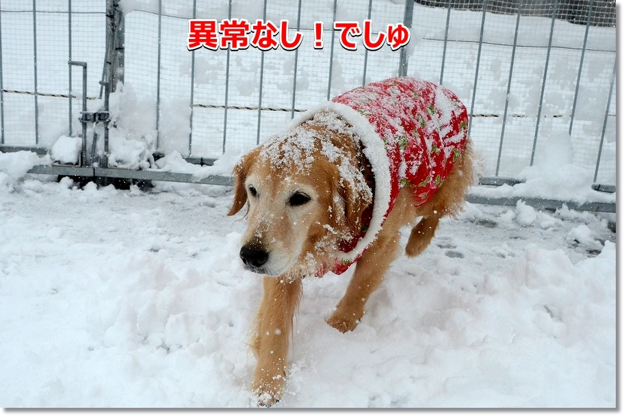 DSC_9377警備犬