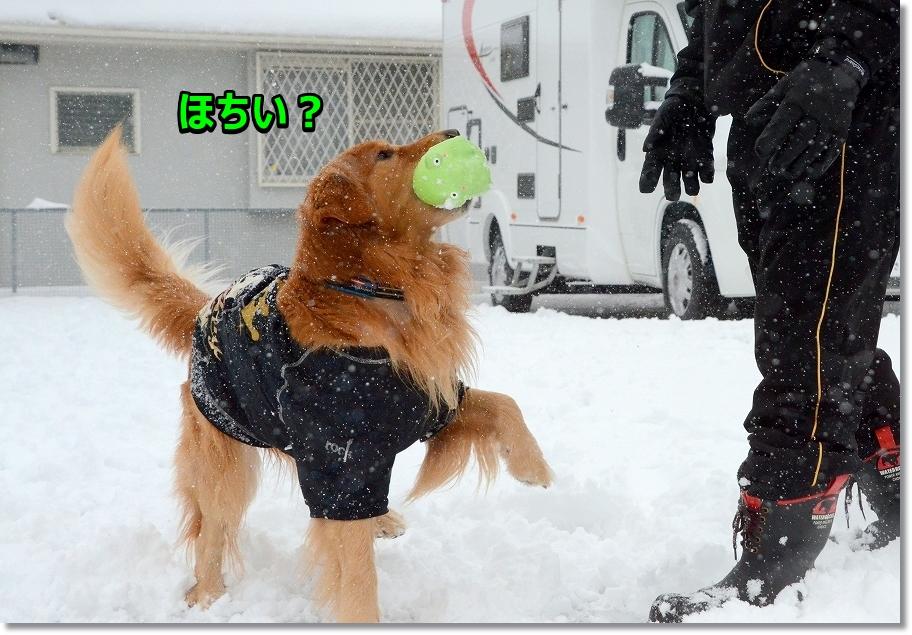 DSC_9403ほれほれ~