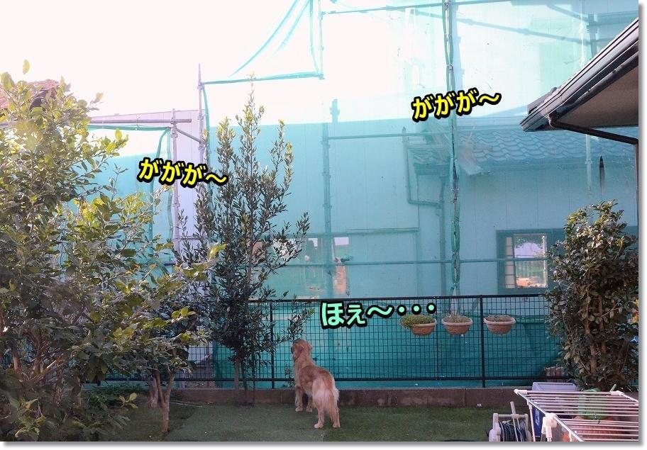 DSC_6983ほぇ~らん丸