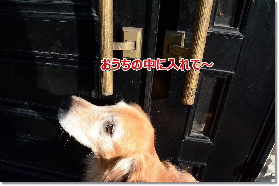 DSC_6992家のなかに避難するでしゅY0~
