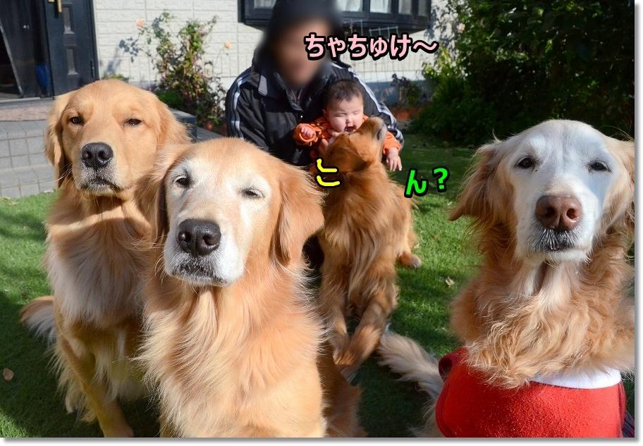 DSC_7343のちぇて