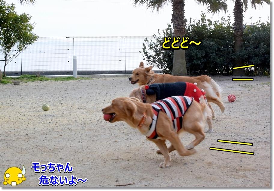DSC_5089モっちゃん危ないよ~