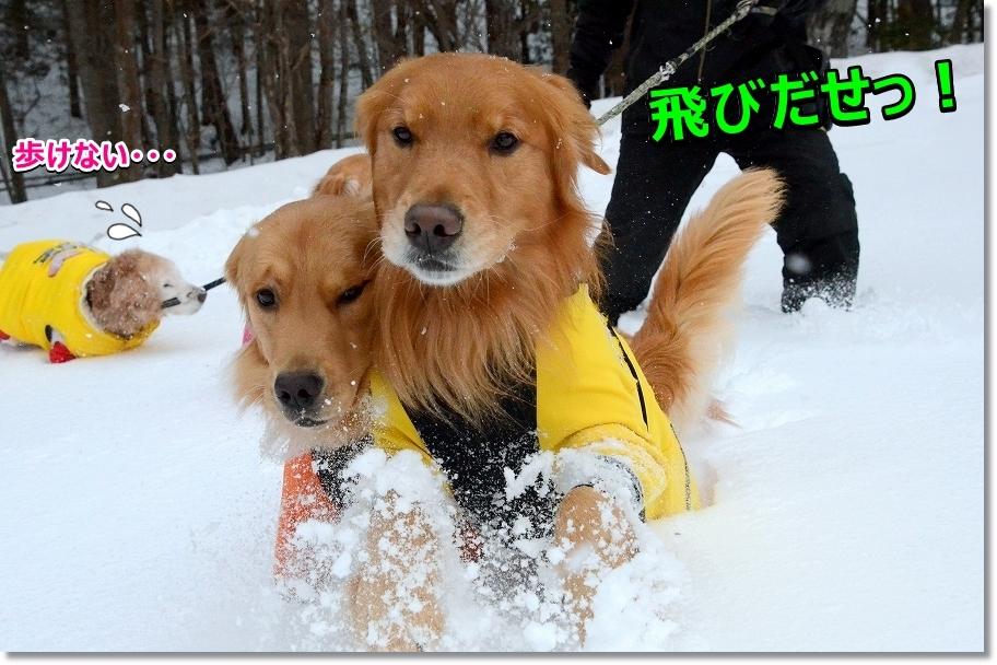 DSC_9612しょれ~!