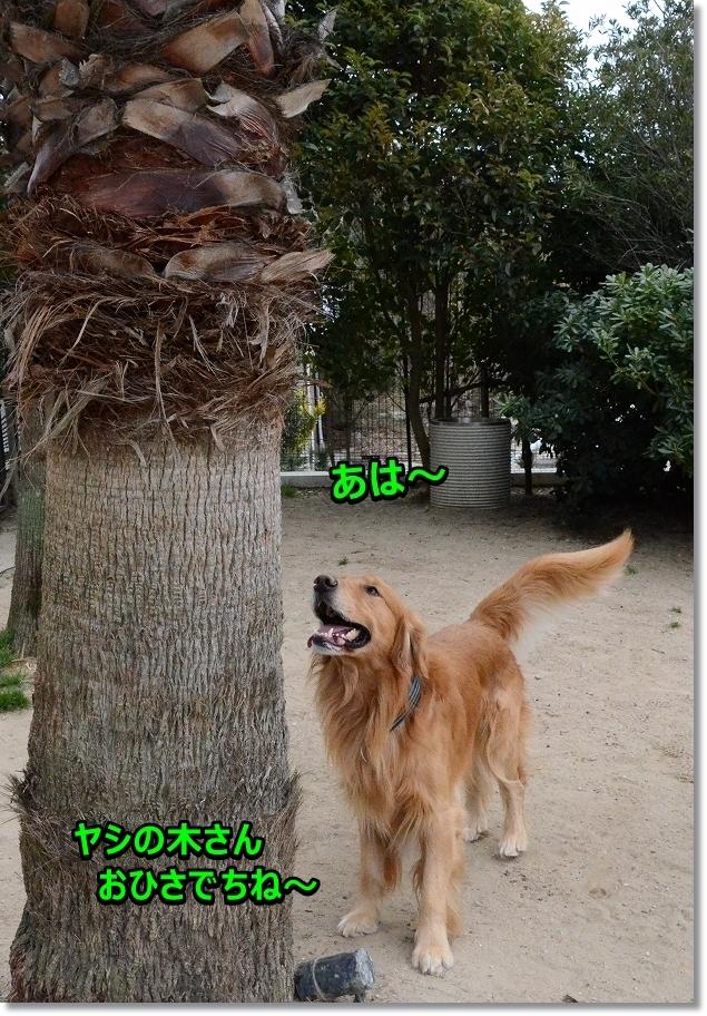 DSC_0341いくじぇ  ??